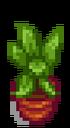 Комнатное растение 14
