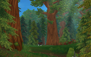 Redwoodträd och en häst