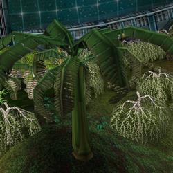 Plants producing food supplies