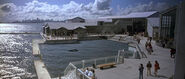 Cetacean Institute