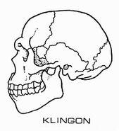 Klingon augment skull diagram