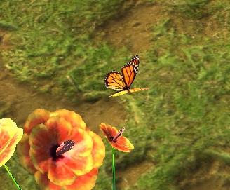 Risian butterfly