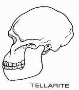 Tellarite skull diagram