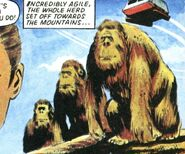 Zeltok-gorillas