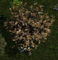Y'gora tree.jpg
