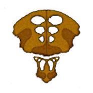 Logo-species8472t