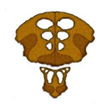 Logo-species8472t.jpg