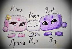 Moon and his parents..jpg