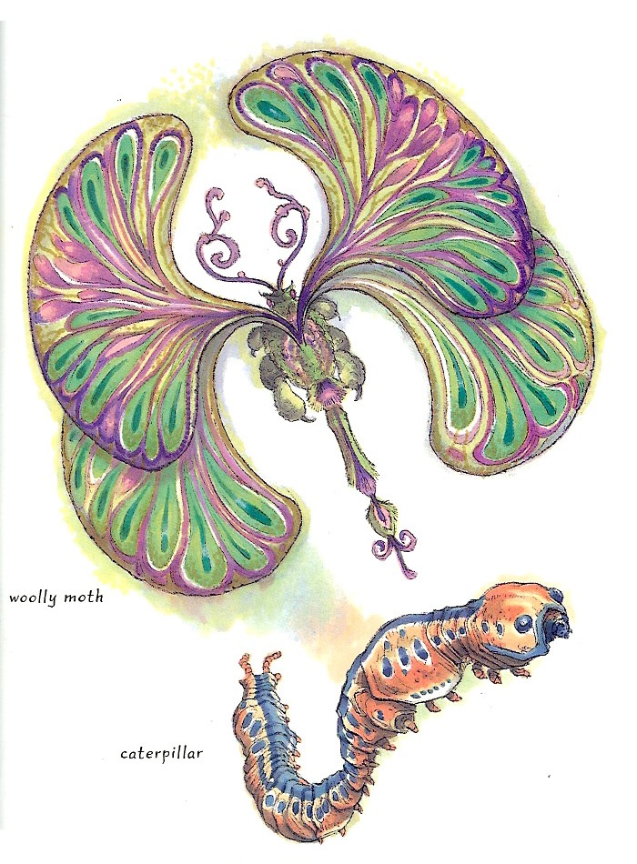 Alderaan furry moth