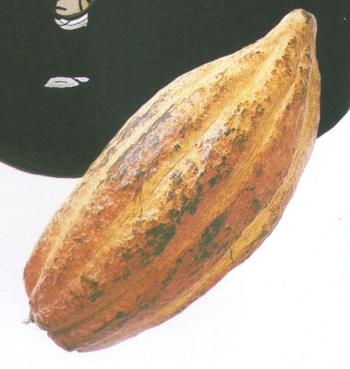Hubba gourd