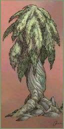Boffa Plant