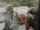 Unidentified shoretrooper squad
