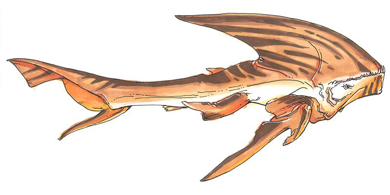 Firaxan shark