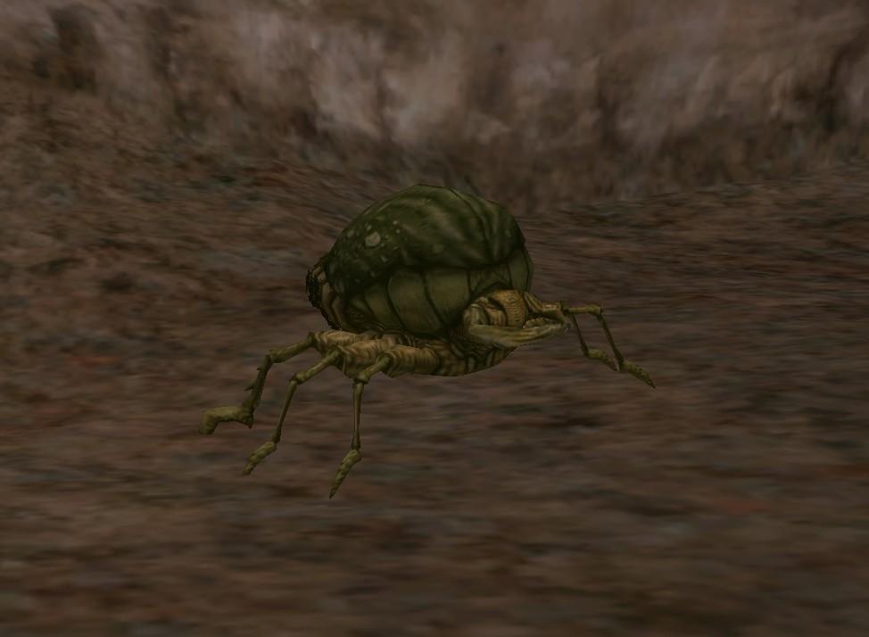 Cave beetle