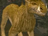 Corellian slice hound
