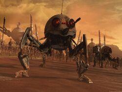 Dwarf Spider.jpg