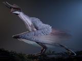 Shyyyo bird