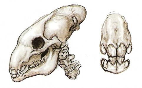 Bone/Legends