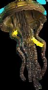 Hydroid Medusa