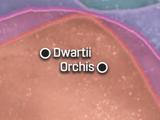 Dwartii