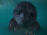 Unidentified frog species