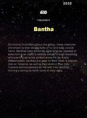 Bantha-2015-Back