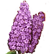 Flower Shop Summer In Fairbrook Emoticon purplelilac