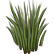 The Promised Land Emoticon bush