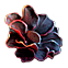 House of 1000 Doors The Palm of Zoroaster Collectors Edition Emoticon Oblivion Flower