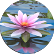 Wild Island Quest Emoticon water lily