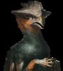 Avian normal 07