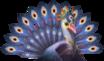 Avian 18