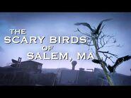 Scary Birds-2