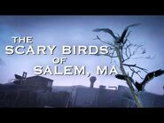 Scary Birds