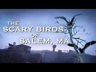 Scary_Birds