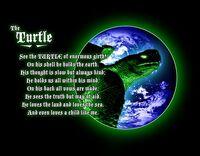 Maturin the Turtle.jpg