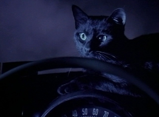 Sam (cat)