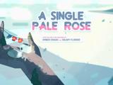 Zwykła Rose