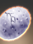 Cardassian Taspar Egg icon.png