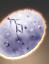 Cardassian Taspar Egg icon.png
