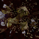 Episode Arc - Gamma Quadrant.png