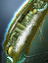 Console - Universal - Gateway Trap Spawner icon.png