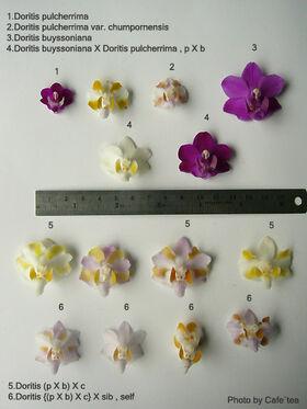 Porównanie kwiatów
