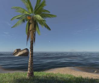 Tall Palm Tree.png