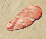 Raw Medium Meat