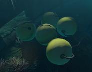 Buoy Balls