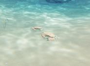 CoupleCrab