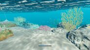 Swimming below the Boat