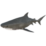 Tiger Shark.png