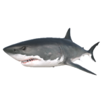 Great White Shark.png